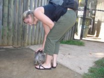 Baby Wallaby wanted to eat my shoe